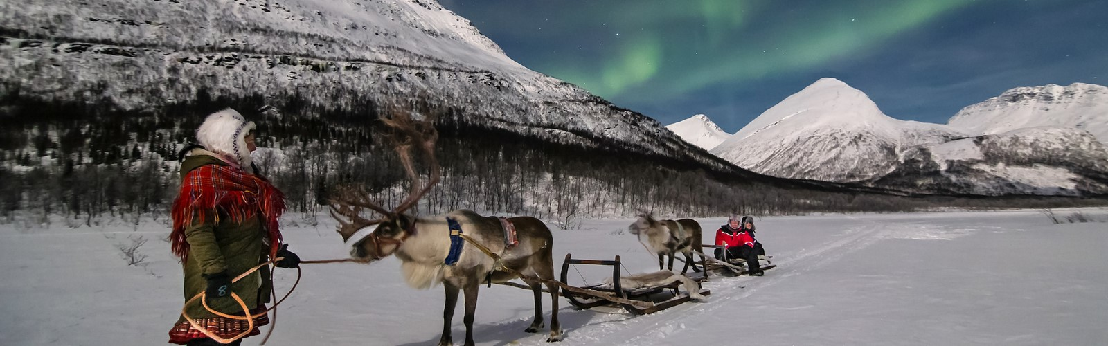 Reindeers & Northern Lights