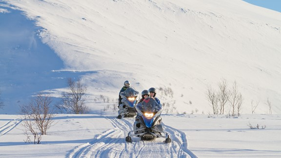 Dog sledding and snow tours