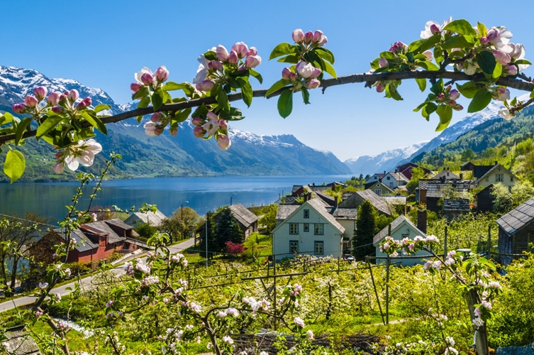 Cider tour in Hardanger from Bergen
