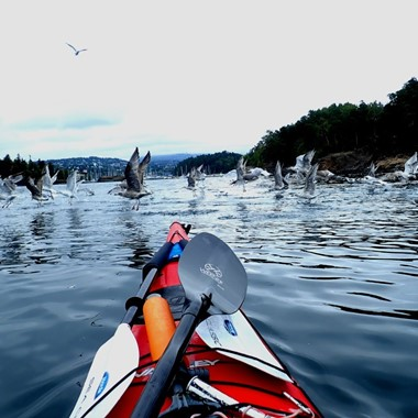 Guided kayaking trip in Oslo