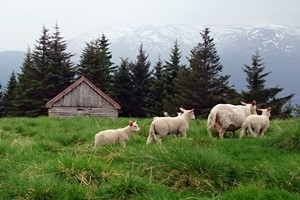 Mountain farm   - Explore Voss with Fjord Tours, Voss - Norway