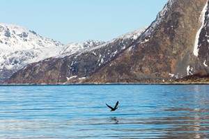 Wildlife, culture and scenery tour by RIB boat in Tromsø