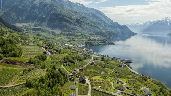 Experience Lofthus on the Cider tour in the Hardangerfjord - Hardanger, Norway